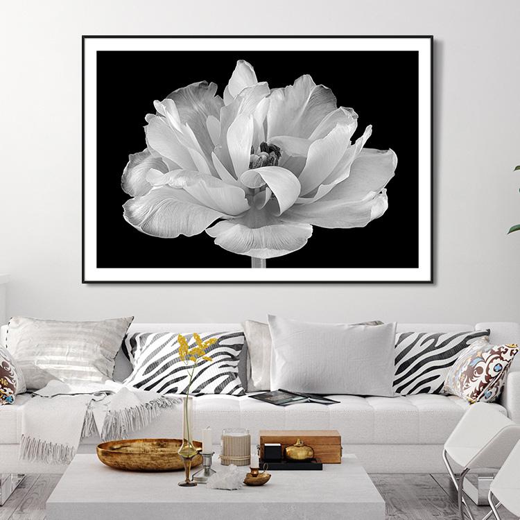 Tulip in its glory