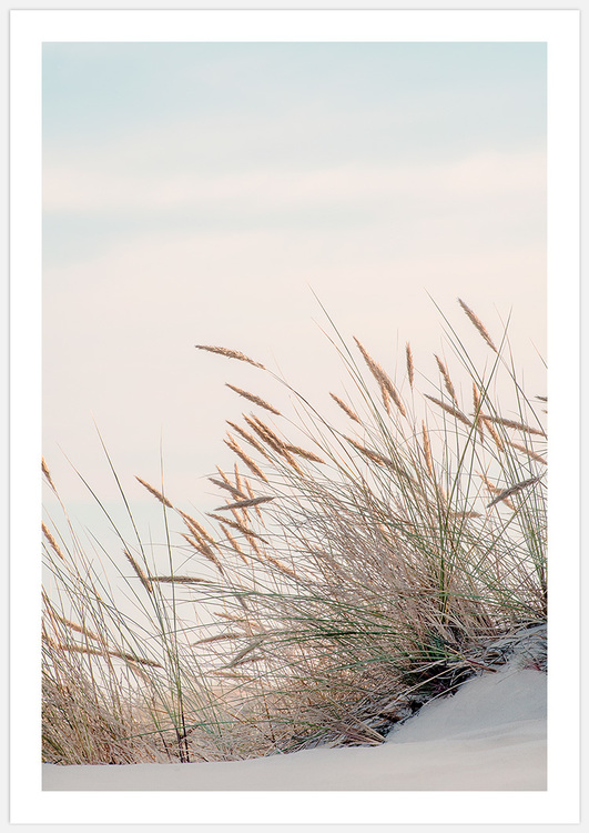 Reeds by the sea