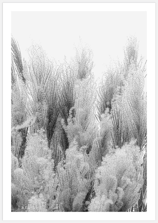 Reeds in Black & White 2