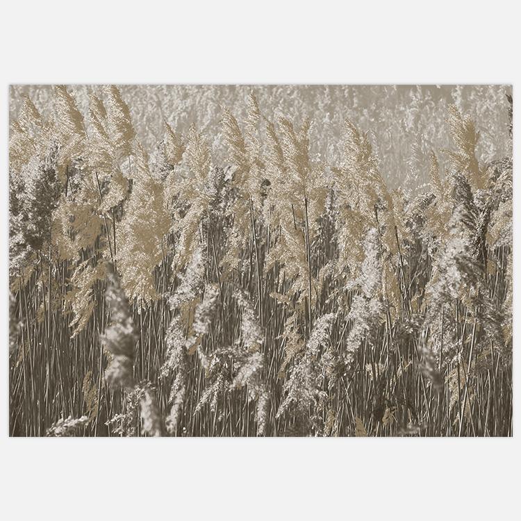 Reeds Art