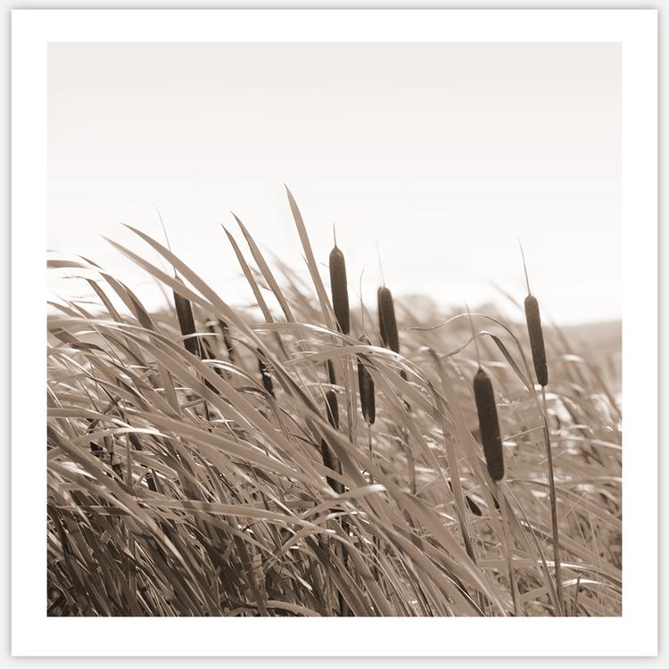 Summer breeze in beige 2