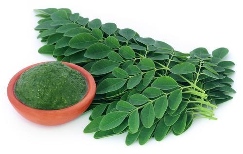 Moringa, en stark antioxidant