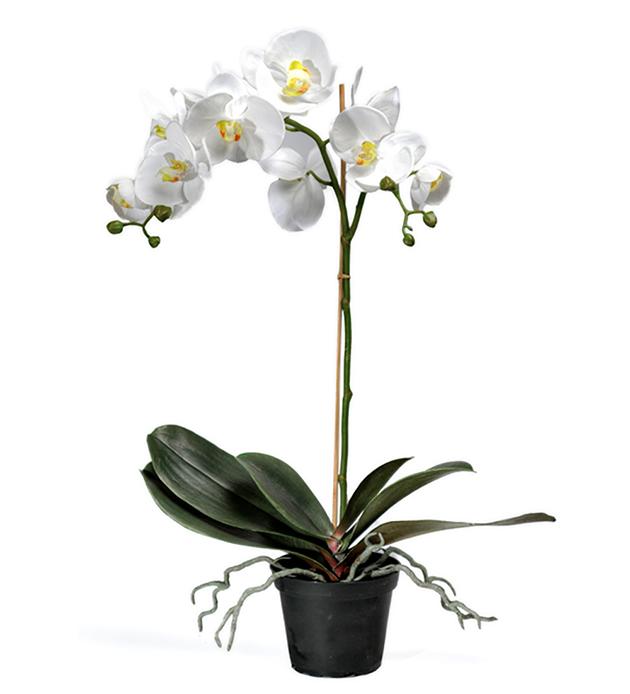 Orkidé Vit 60cm Mr Plant