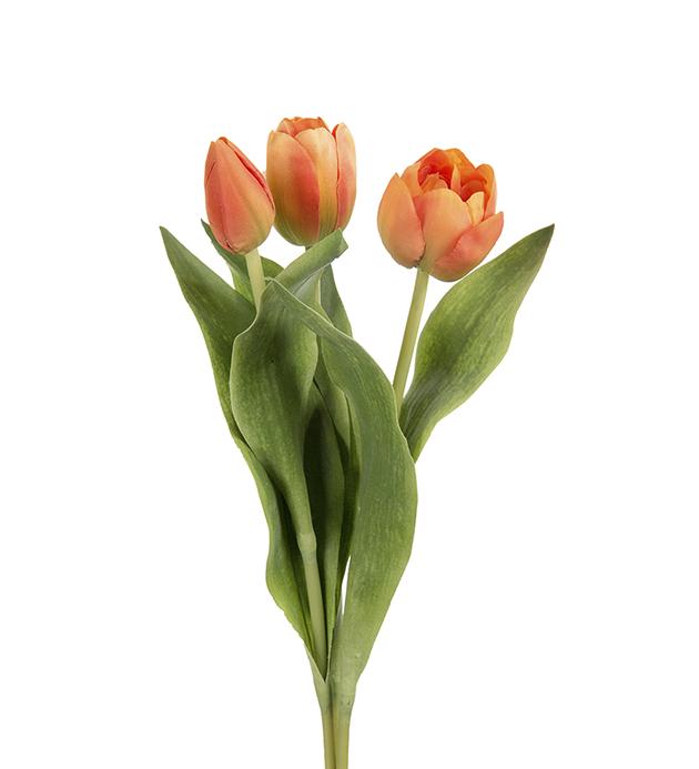 Tulpan Orange Siden Mr Plant