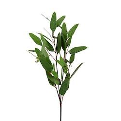 Eucalyptus 80cm Mr Plant