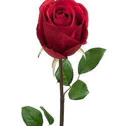 Ros Röd 75cm Mr Plant