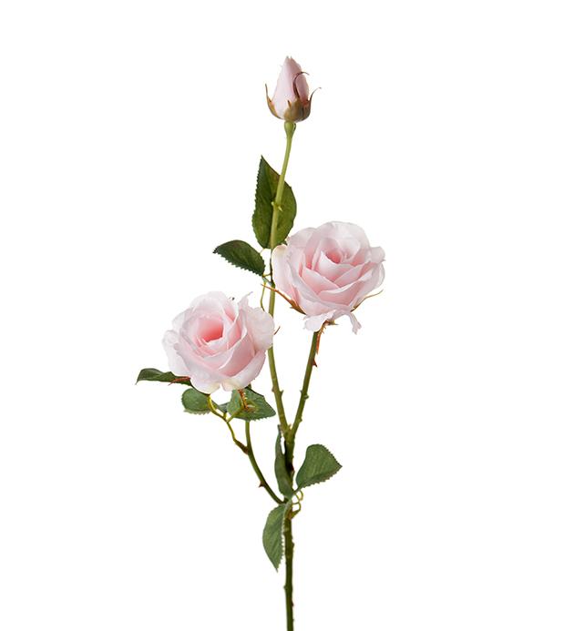 Ros Rosa 68cm Mr Plant