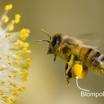 Ekologiskt Blompollen/Bipollen