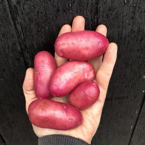 Cherie, röd potatis, 2 kg
