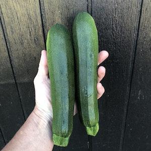 Zucchini 1 st