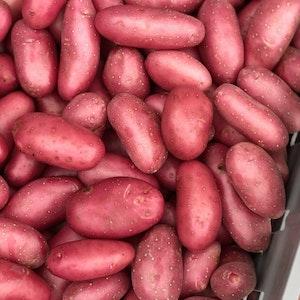 Små potatis - Cherie 1kg