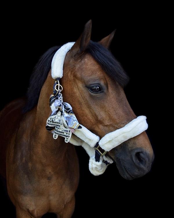 Hästnyckelring | Silver