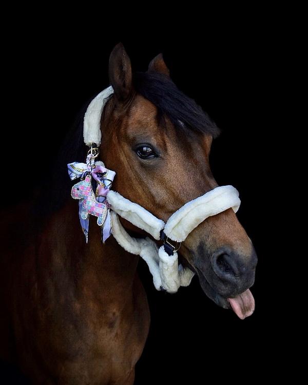 Hästnyckelring | Regnbågsfärgad