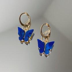 Fjärilsörhängen | Blå
