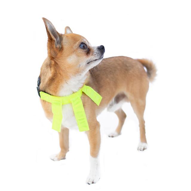 Dogman, reflexhalsband m. flärpar, gul