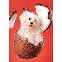 Clementoni, My Little Friends, cocco dog, 260bitar