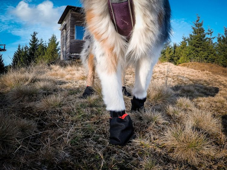 Non-Stop Solid Socks