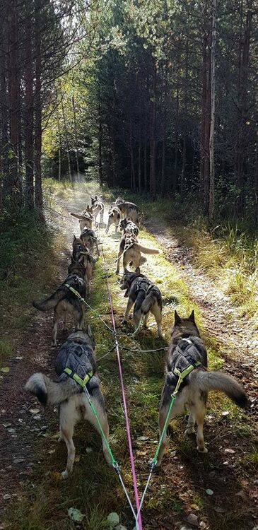 Träningslina Wire - Team Sektion