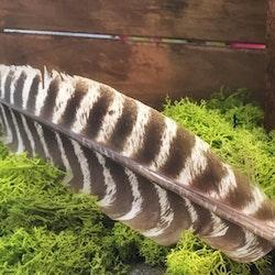Smudgefjäder 20-25 cm