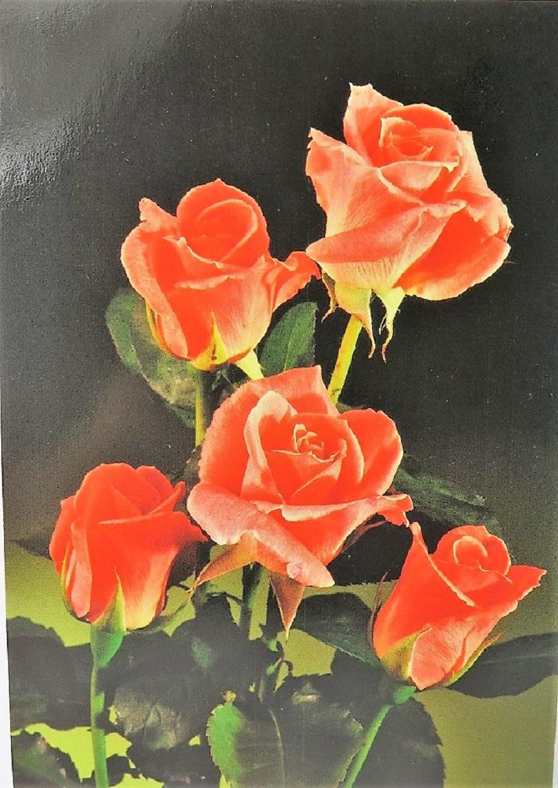 **Vykort** Blommor