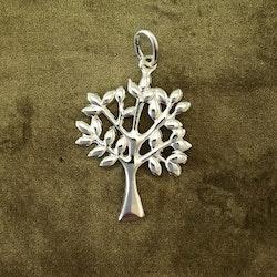 Livets träd - Silverhänge