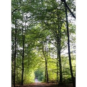 Skog grön