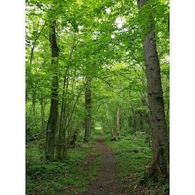 Grönskog