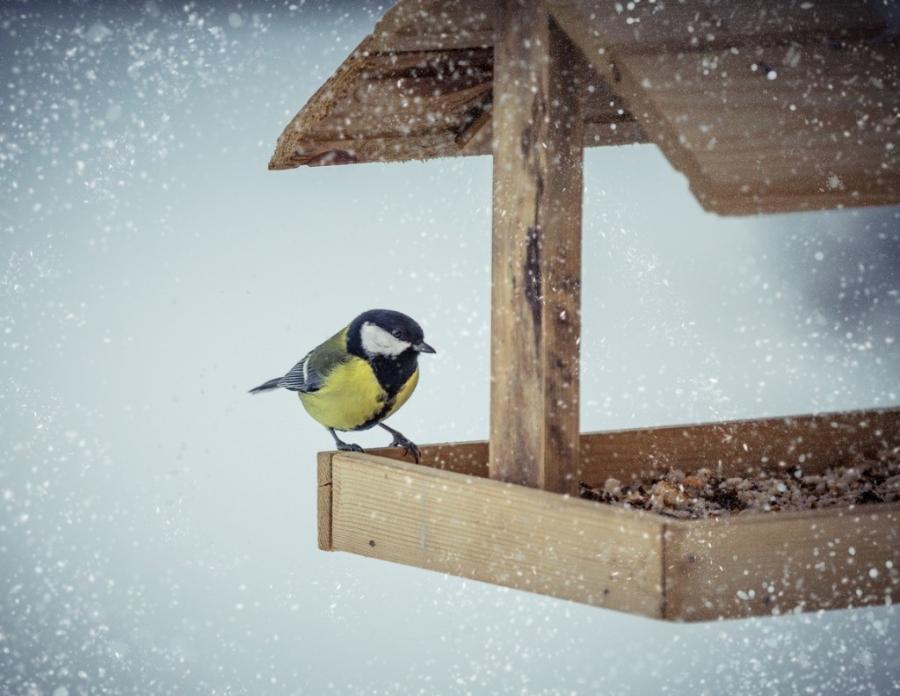 Fågelmat och matarecta image