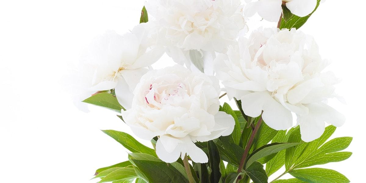 Whiter shade