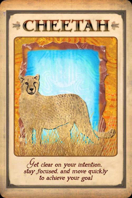 Messages From Your Animal Spirit Guides Cards  av Steven Farmer