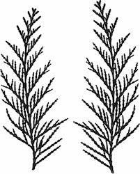 1443-Gummistämpel   Växtmotiv