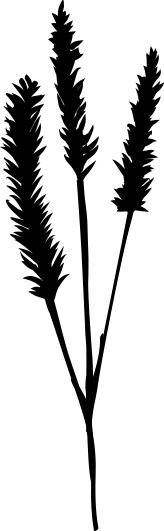 1421-Gummistämpel   Växtmotiv Grässtrå