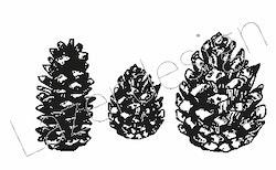 1157-Stämpel små kottar