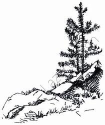 14190-Stämpel Strandtall vid stenröse
