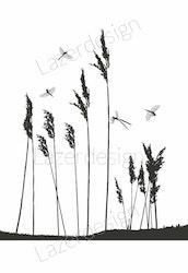 14153-Stämpel sjögräs