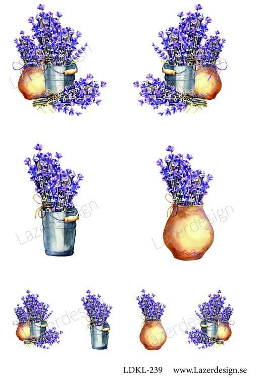 LDKL-239 Klippark Lavendel i kruka