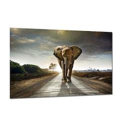 Canvas Tavla Elefant 75X100