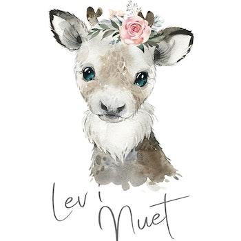 Ren - Lev i nuet ( Konsttryck / Poster )