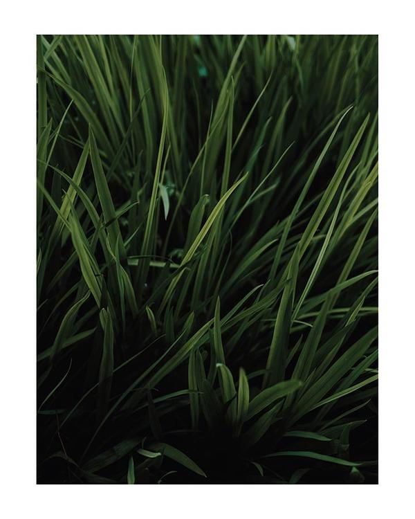 Poster/Konsttryck - Gräs