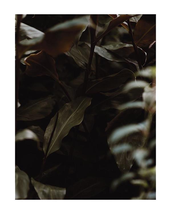 Poster/Konsttryck - Bladväxt
