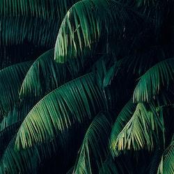 Poster Palmblad