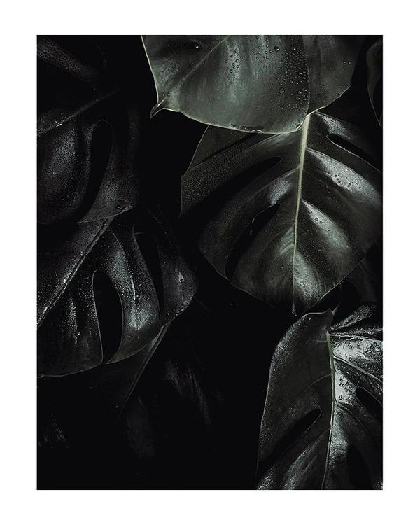 Poster/Konsttryck - Djungelblad