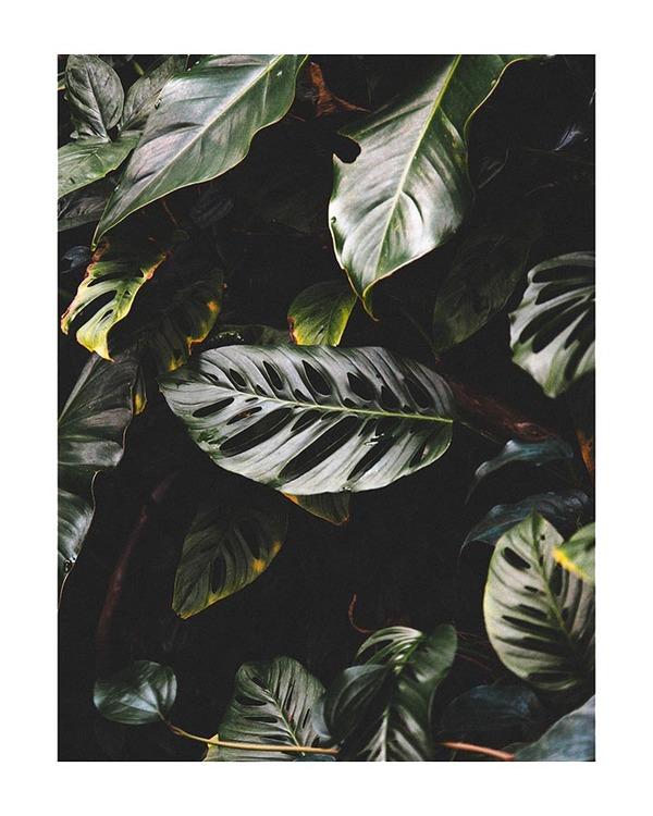 Poster/Konsttryck - Underbara blad