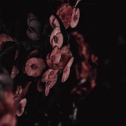 Poster/Konsttryck - Röda Blommor