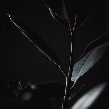 Poster/Konsttryck - Bladväxt I skuggan