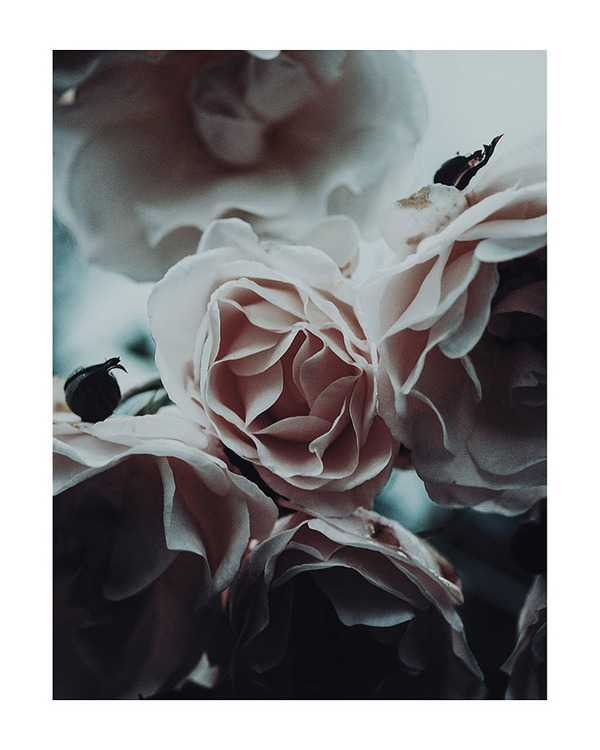 Poster/Konsttryck - Rosbukett