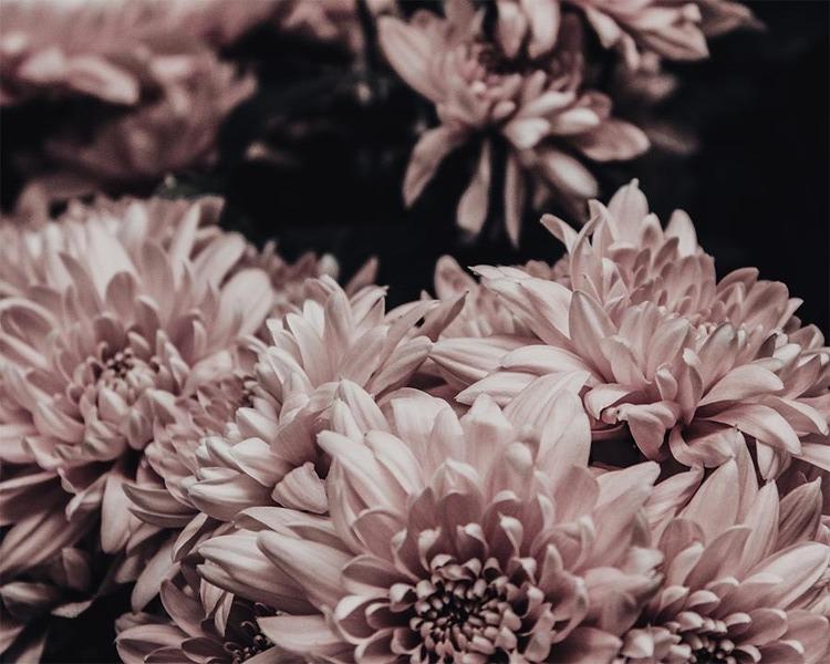 Poster/Konsttryck - Blomster