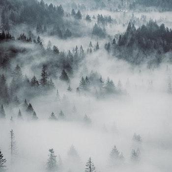 Poster/Konsttryck - Dimmig skog