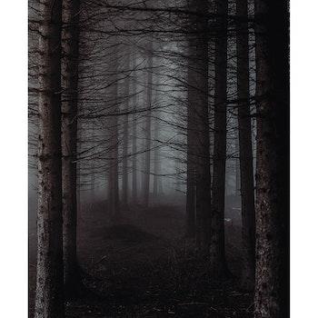 Poster/Konsttryck - Skog
