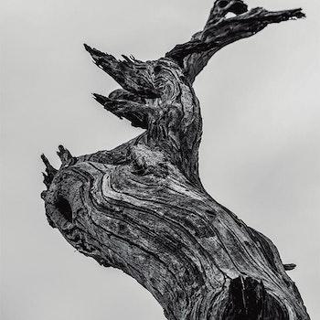 Poster/Konsttryck - Vishetens sträd